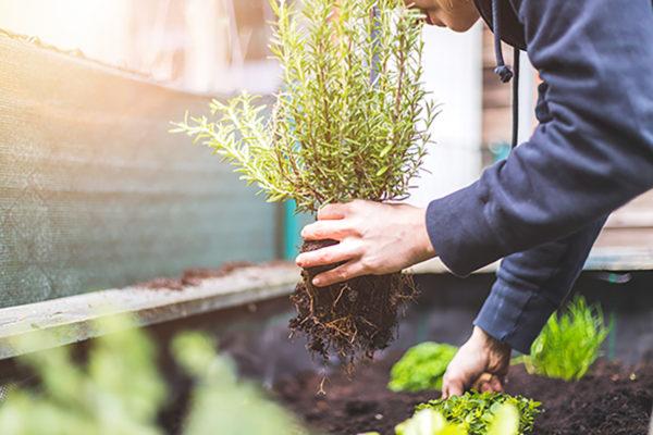 Få jord under neglene i nyttehaverne